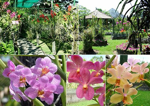 Taman Anggrek Bali