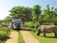 Taman Safari di Bali