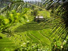 Anturan Bali