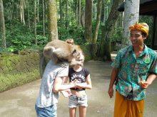 Pemandu di Objek Wisata Sangeh